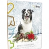 brit-advent-kal_dog