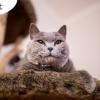 Brit Premium Cat (1)