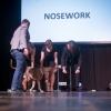 Kynolog roku 2016 - nosework-ukazka