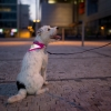 Brit Collar with reflective scarf&leash_pink_269 Kč